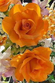 Different Color Roses Flowers