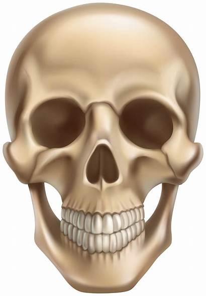 Skull Clipart Halloween Transparent Yopriceville