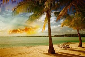 sea, palm, tropical, beach, sunshine, sand :: Wallpapers