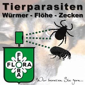 Hund Würmer Hausmittel : tropfen von w rmern und fl he f r welpen ~ Frokenaadalensverden.com Haus und Dekorationen