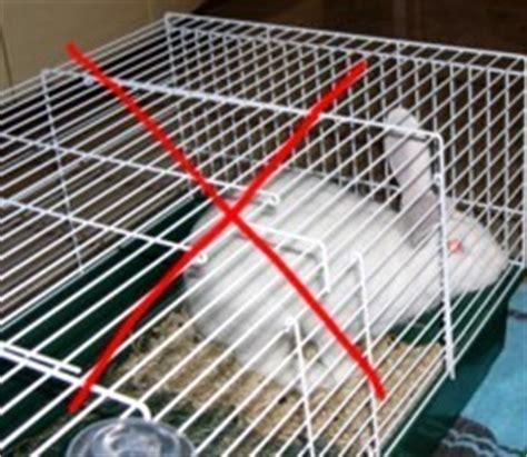 maltrattamento animale la storia del coniglietto tippy