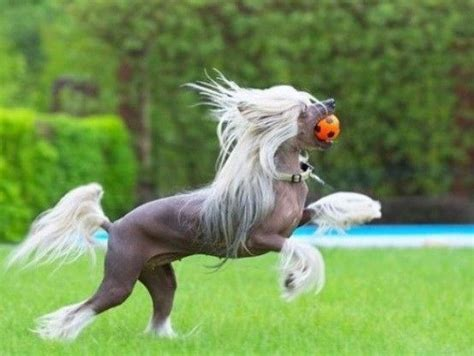 horses dogs equestrian horse dog looks