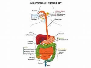 Advanced Human Biology Diagrams