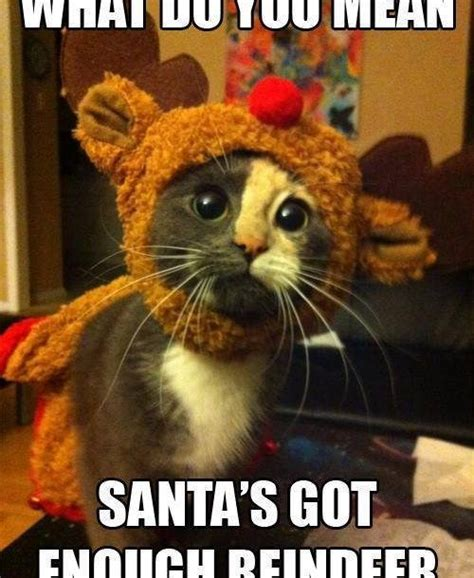Christmas Memes 2018 - funny christmas cats pictures merry christmas happy new year 2018 quotes