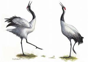 Dancing Red-crowned Cranes – Emily Willoughby Art