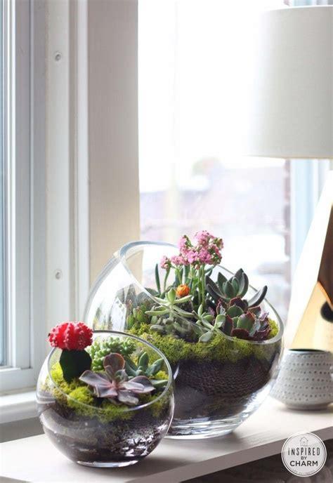 25 best ideas about indoor succulent garden on