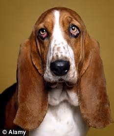 Droopy Eyes Dog | www.pixshark.com - Images Galleries With ...