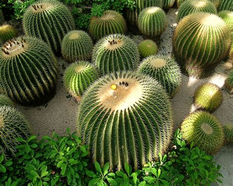 pictures of cactuses desert cactus hd wallpapers life insurance canada