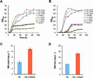 Effects Of Deleting The Primary Metabolic Genes In S