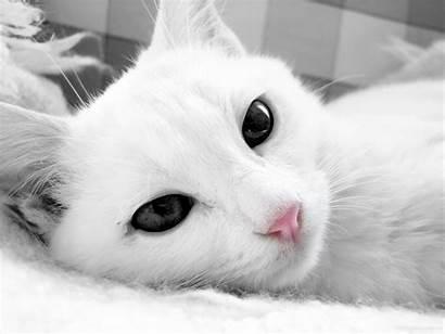 Cat Wallpapers Desktop