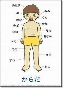 diagram of japanese body parts. body parts diagram poster royalty free  vector image. index of voa special english word book. best 25 body parts  ideas on pinterest parts of the body. elephant  2002-acura-tl-radio.info
