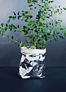 Eucalyptus Plante D Intérieur : des plantes d coratives aux vertus bien tre marie claire ~ Melissatoandfro.com Idées de Décoration