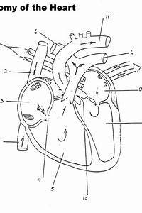 Free Anatomy Physiology Coloring Pages