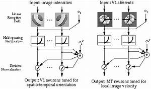 Computational Model Of Neurons In Visual Area Mt