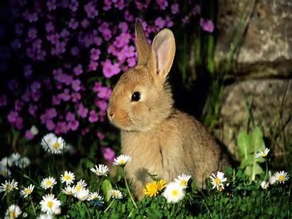 Rabbit Wallpapers Animals Bunny Bunnies Rabbits Easter