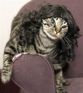 cat wigs 301 moved permanently
