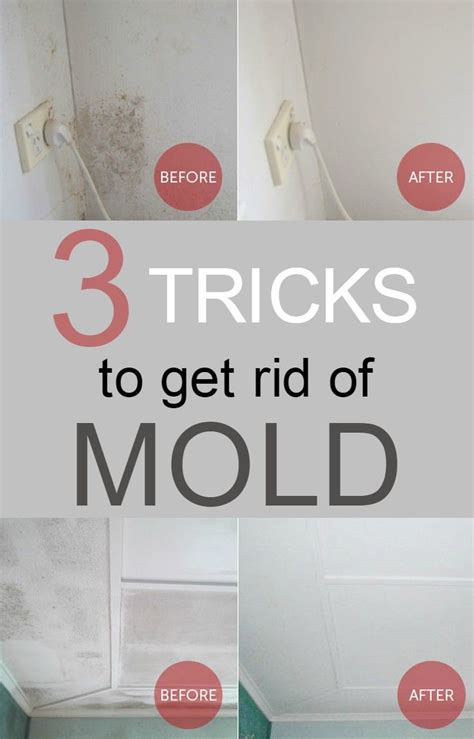 3 tricks to get rid of mold 101cleaningtips net chang