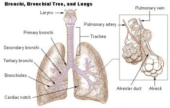 copd chronic obstructive pulmonary disease physiopedia