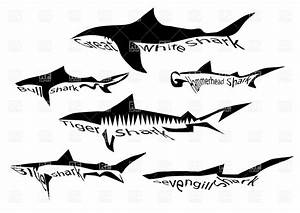 Species of shark - silhouette of sharks isolated on white ...
