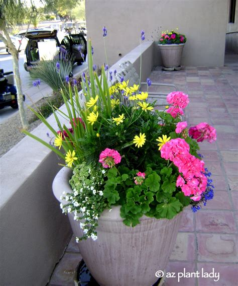"""Container Gardening Book Review & Giveaway """"getting"""
