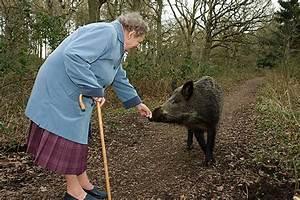 Feral Pigs | ferrebeekeeper