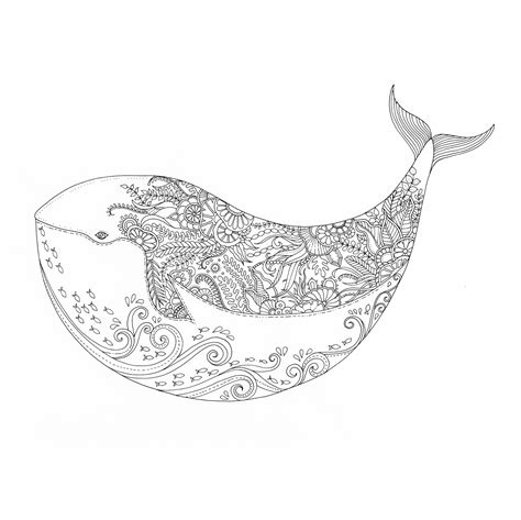 coloring  great black white whale literary hub