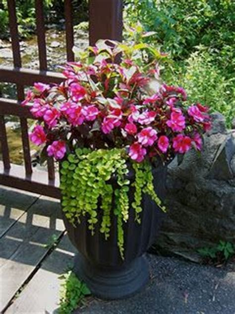 114 best shade container gardens images on