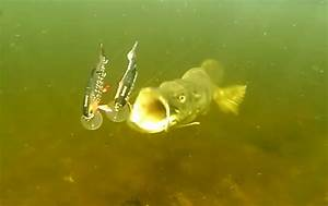 Video: 10 Insane Underwater Pike Attacks from 2015 ...