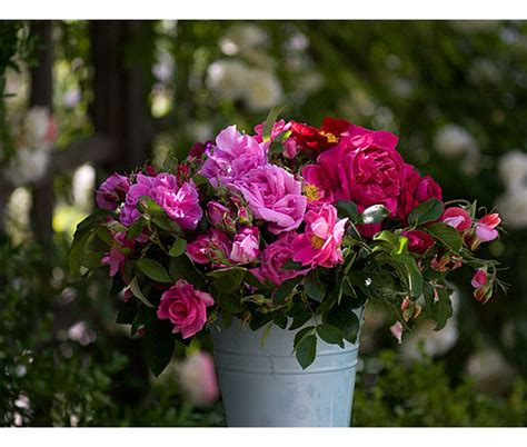 bucket  roses rose notes