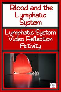 Lymphatic System  Video Reflection Activity