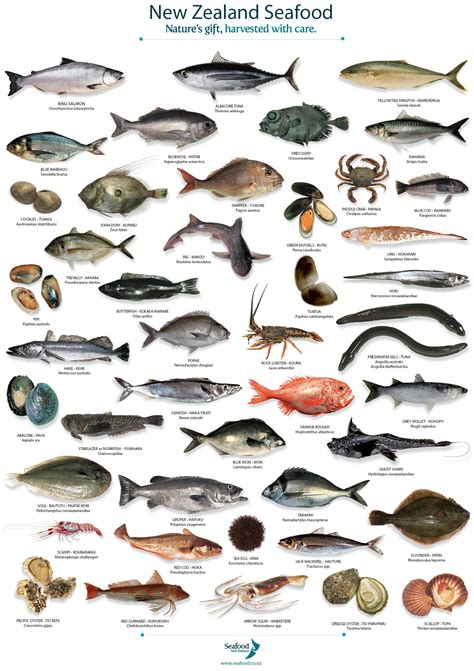 fish names nz fish species tea towel auckland seafood school seafood cooking classes in auckland