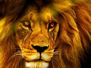 3D Wallpaper Desktop Backgrounds Lion WallpaperSafari