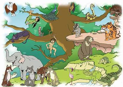 Welpen Scouting Jungle Mowgli Scouts Figuren Overloon
