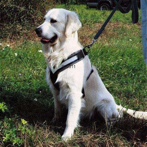 Hunde Sicherheitsgurt Test