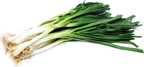 Leeks Images Leeks Information Recipes And Facts
