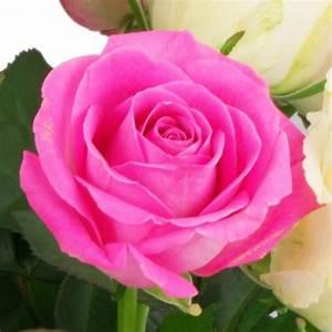 Begleitpflanzen Für Rosen : 15 rosa wei e rosen blumenversand blumen online verschicken ~ Orissabook.com Haus und Dekorationen