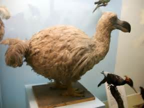 Dodo Bird History
