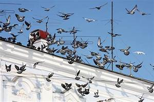 Auf Dem Dach : tauben auf dem dach stockbild bild von dach gelb vogel 26709611 ~ Frokenaadalensverden.com Haus und Dekorationen