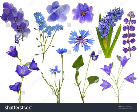 blue and white flowers names set blue flowers isolated on white stock photo 130132322 shutterstock