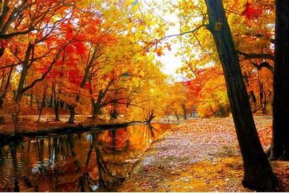 Wallpapers Autumn Orange Foliage Widescreen Wide Yellow