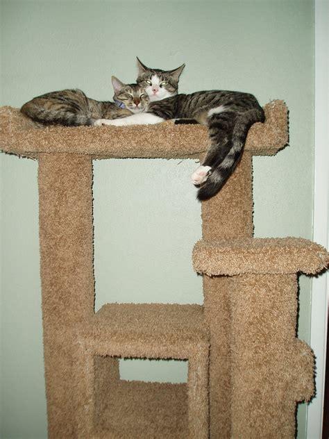 custom cat furniture custom design build cat furniture adam