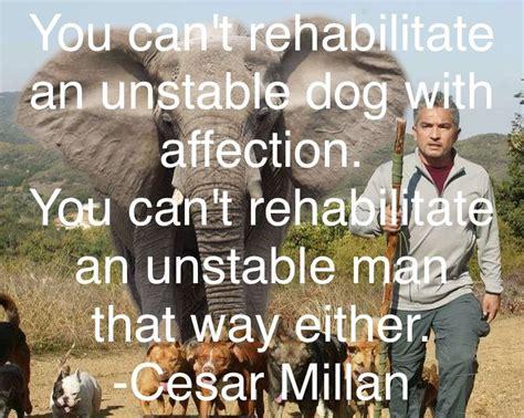 cesar millan quotes  sayings quotesgram