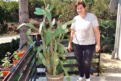 Buket / Kaktus
