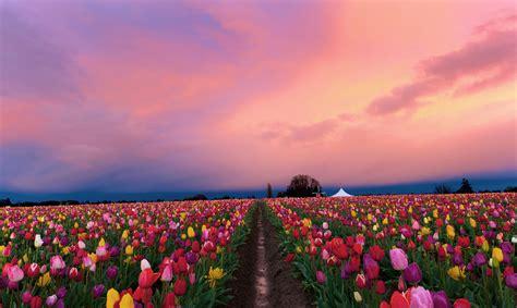 Nature Wallpaper Hd Widescreen High Quality Desktop Pics