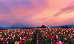 Nature Wallpaper Hd Widescreen High Quality Desktop Pics ...
