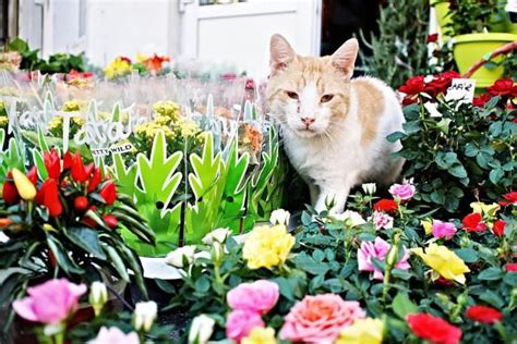 how to keep cats out of your yard 10 ways to keep cats out of your yard cats and yards