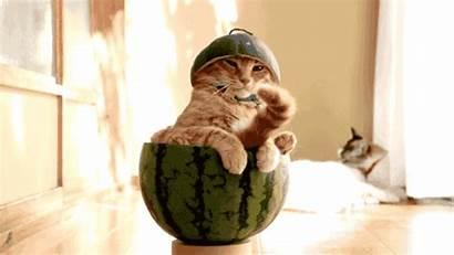 Watermelon Funny Cat Gifs Stuffoncats Redd