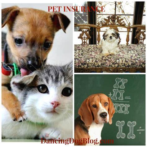 Ee  Pet Insurance Ee   Whats Best For Your  Ee  Pet Ee   Dancing Dog Blog