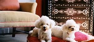 Hotel Pour Chien : h tel de luxe pour chiens ~ Nature-et-papiers.com Idées de Décoration