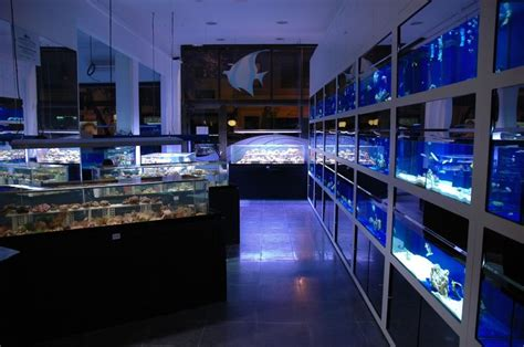 aquarium accessories shopping new fish store in madrid spain to use zero edge display tanks news reef builders the reef and
